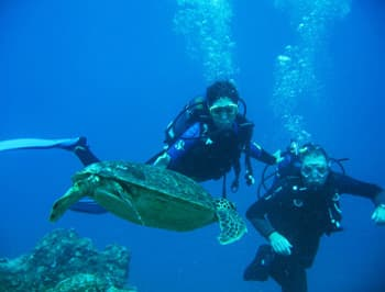 Scuba diving turtles
