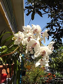 Orchids of the garden