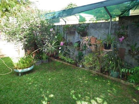 Jardin et orchidées