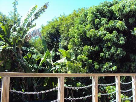 View on the lush vegetation
