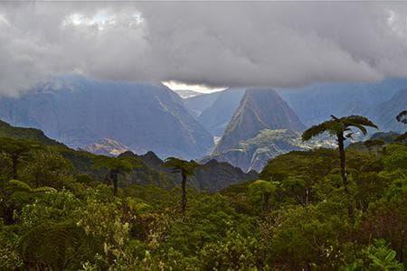 Blacksheep Réunion