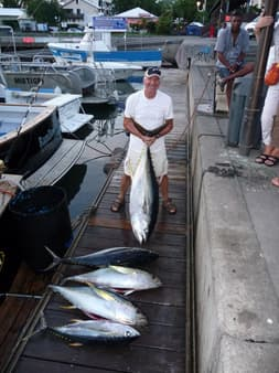 Yellowfin tunas