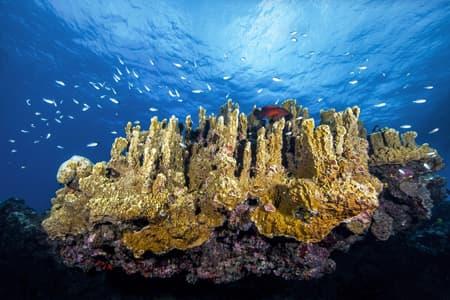 Tombant coralien