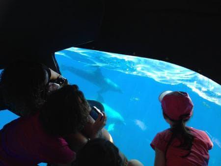 Voir les dauphins évoluer dans leur milieu naturel