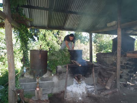 Distillation et alambic