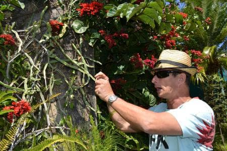 Dodo's botanical tours